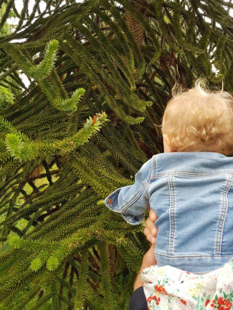 toddler looking at tree wakehurst place