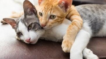 best-cat-scratch-deterrent-spray