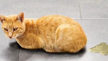 best cat urine remover