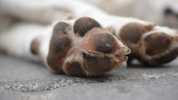 dog paw ready for best pet nail grinder