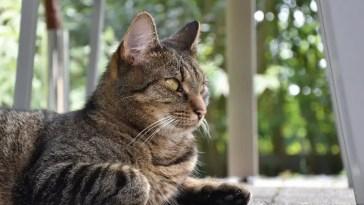 best flushable cat litter