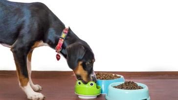 benefits of elevated dog bowls