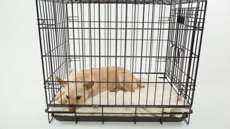 best chew proof dog crate
