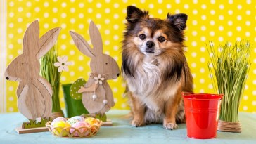 What Human Foods Can Chihuahuas Eat