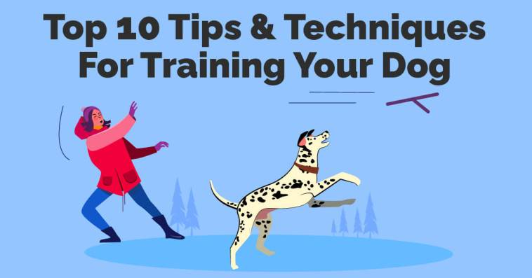 Top 10 Tips & Techniques For Training Your Dog