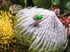 Los exclusivos escarabajos de Daniela Villegas