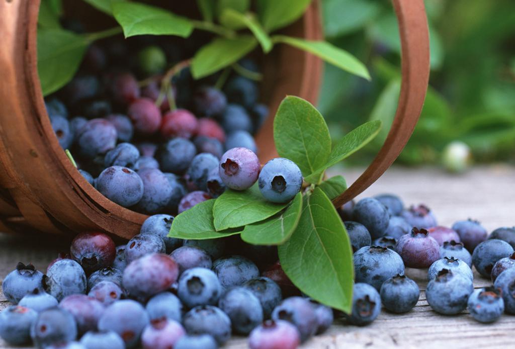 Si te gusta compartir comida con tu perrito, estas 10 frutas son ideales para hacerlo - blueberries-1024x694