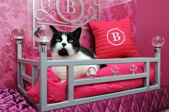 El primer hotel para gatos