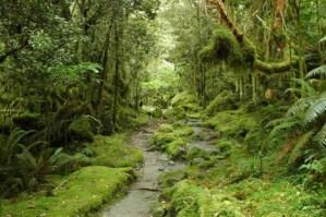 3 rituales japoneses para tener paz mental