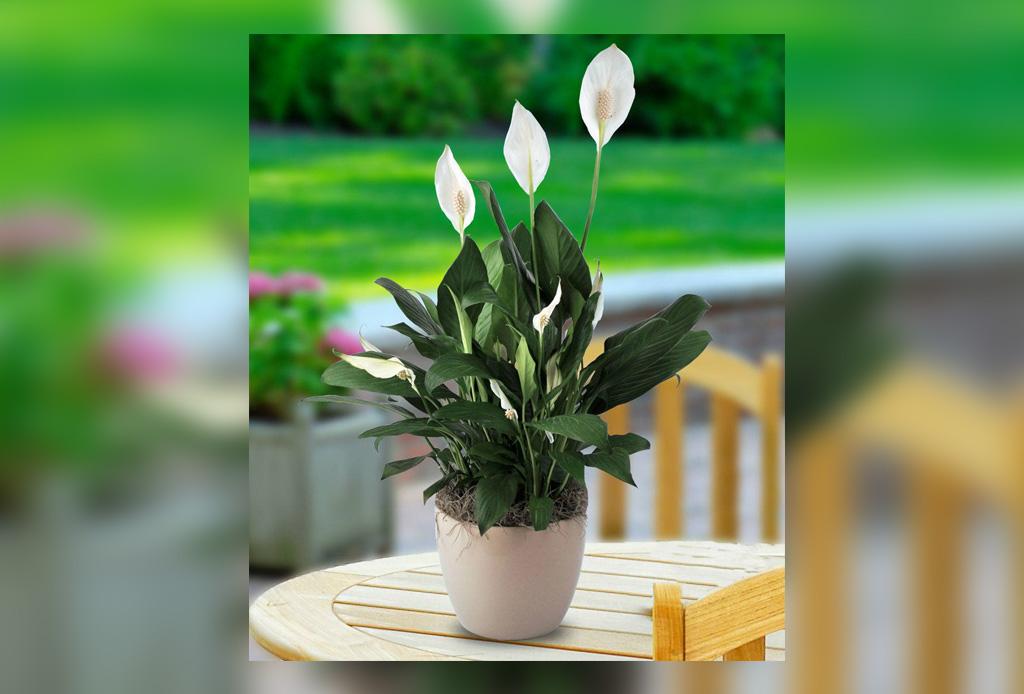 Las plantas de interior m s f ciles de cuidar for Plantas de interior duraderas