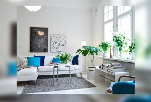 Las plantas de interior más fáciles de cuidar