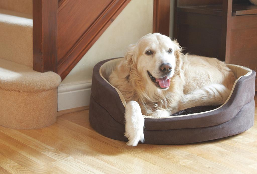 7 consejos para que tu perro no pase frío - cama-para-perro