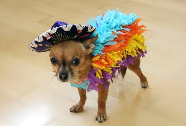 Los disfraces para perro más divertidos para este Halloween - disfraces-apra-perros-pi%C3%B1ata