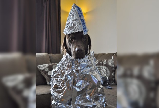Los disfraces para perro más divertidos para este Halloween - disfraz-perro-hershey