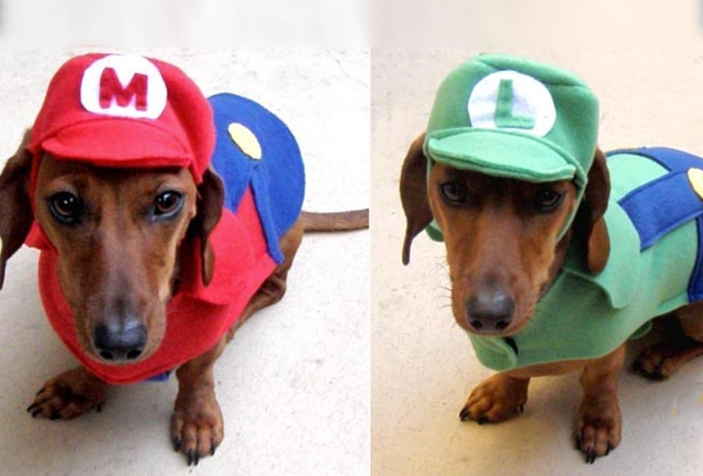 Los disfraces para perro más divertidos para este Halloween - mario-y-luigi-disfraces-perros