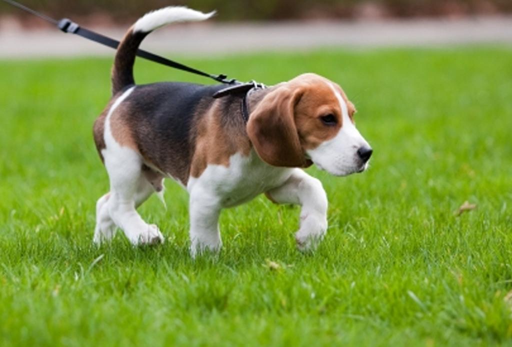 7 consejos para que tu perro no pase frío - paseo-perro-cuidados