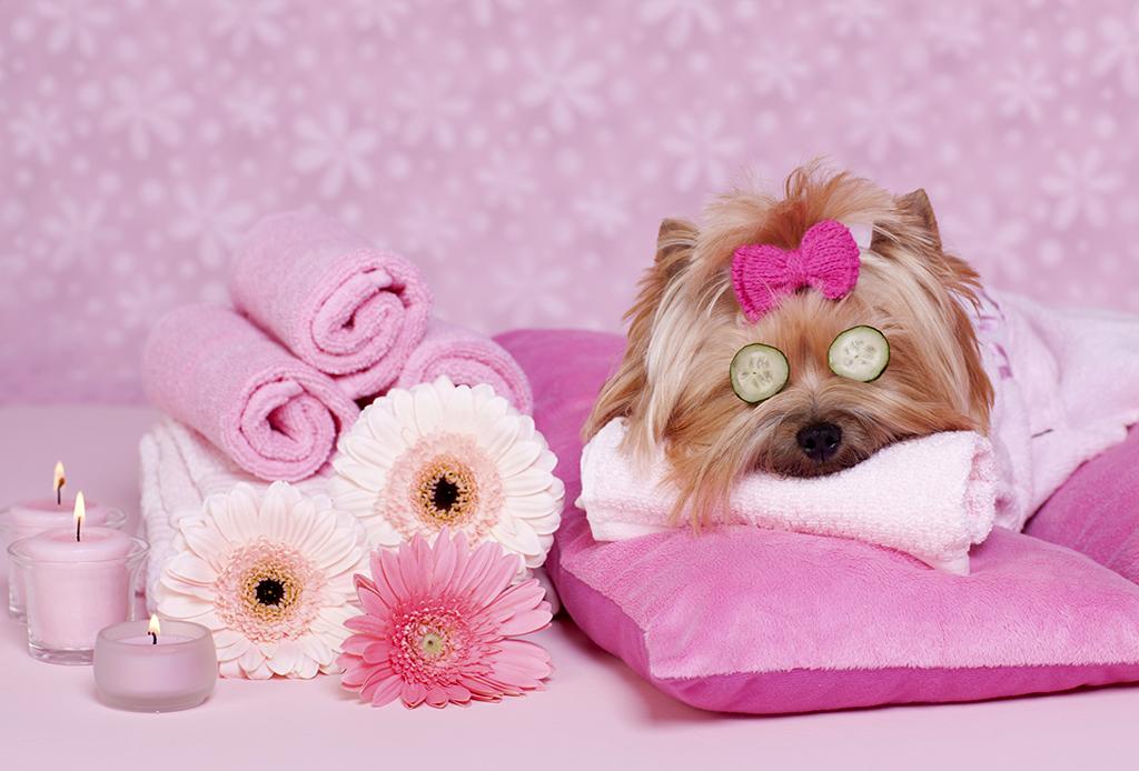 5 sorprendentes servicios en la CDMX para consentir a tu mascota