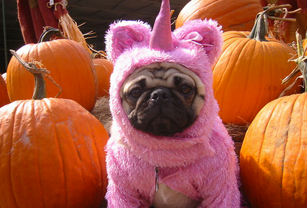 Los disfraces para perro más divertidos para este Halloween - unicornio-disfraz-perro