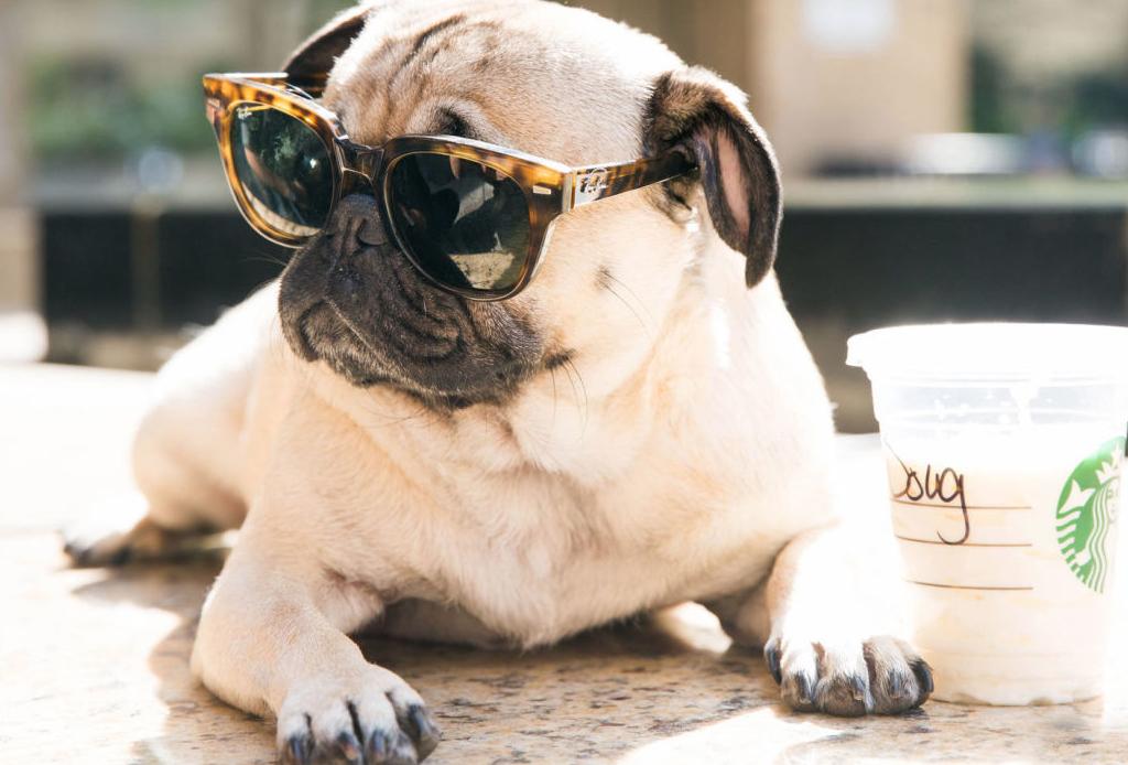 Los 16 perros más encantadores para seguir en Instagram