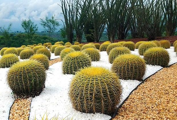 México es hogar del jardín más grande del mundo - jardines-de-mexico-4-1024x694