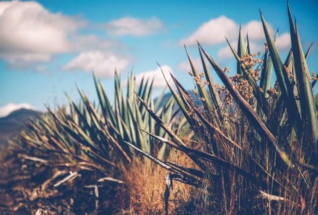 5 razones para cambiar al tequila por el mezcal - mezcal4-1024x694