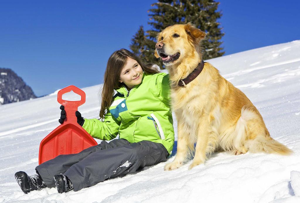 5 resorts dog-friendly para esquiar