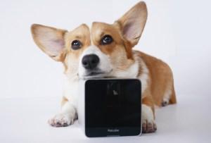 Petcube: la solución para estar todo el tiempo con tu mascota
