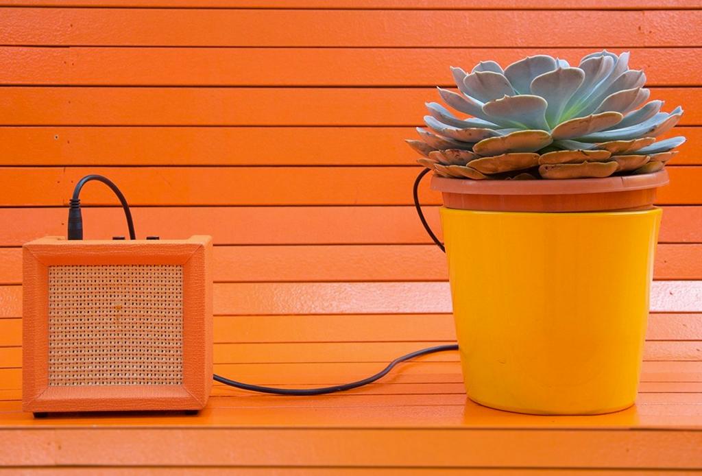 Una playlist dedicada especialmente para tus plantas