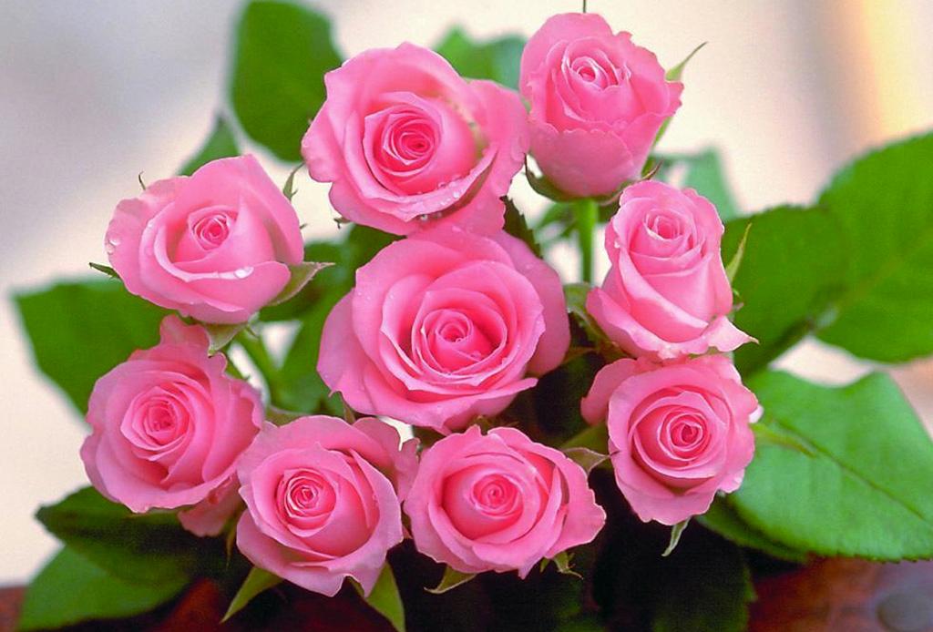 La guía infalible para saber el significado de las flores - rosas