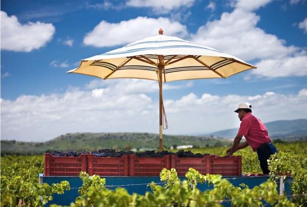 Conoce los viñedos de la Ruta del Vino en Querétaro - vinicola-san-patricio-1024x694