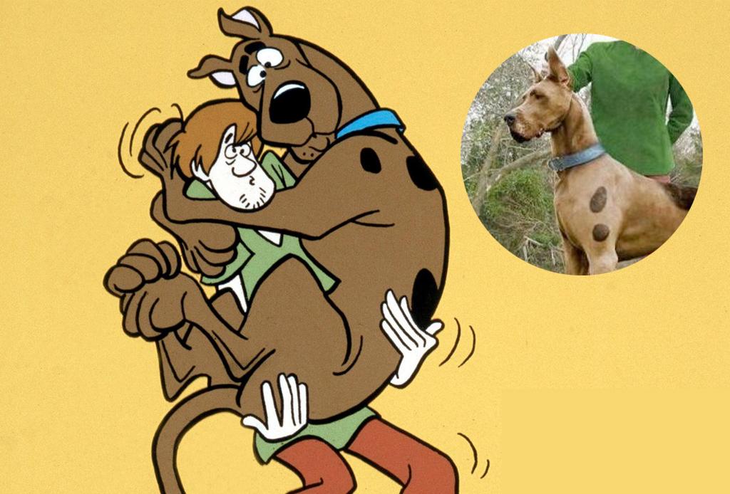 Las razas de perros más famosas de las caricaturas - scooby-1