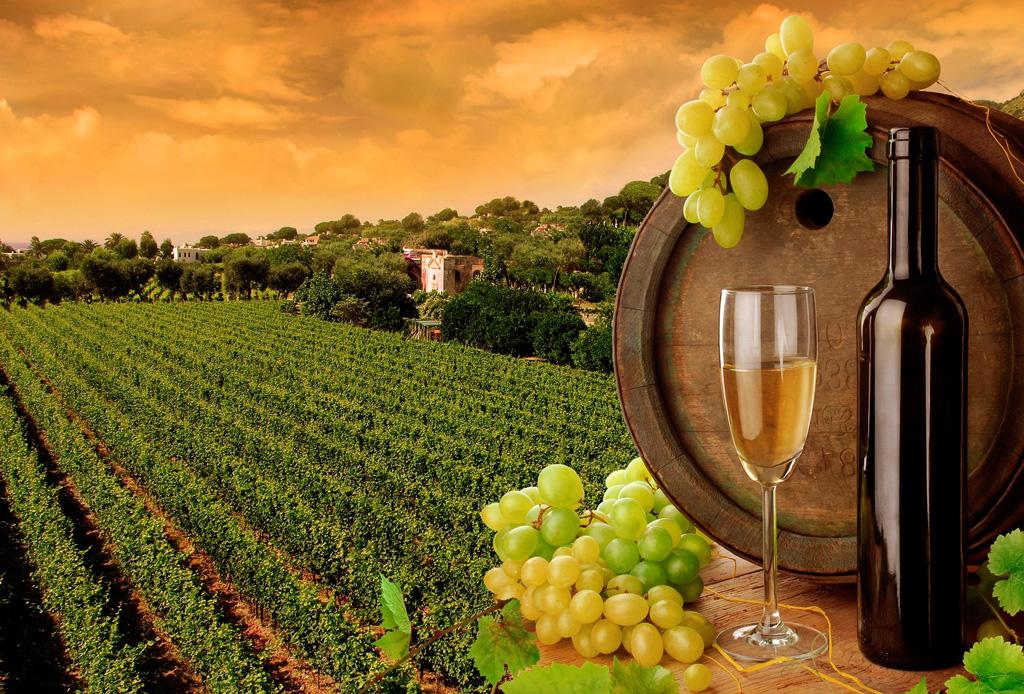 Conoce los 9 mejores viñedos en la Ruta Central del Vino