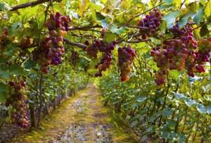 Wine Colors & Music Festival: asiste a esta fusión vibrante