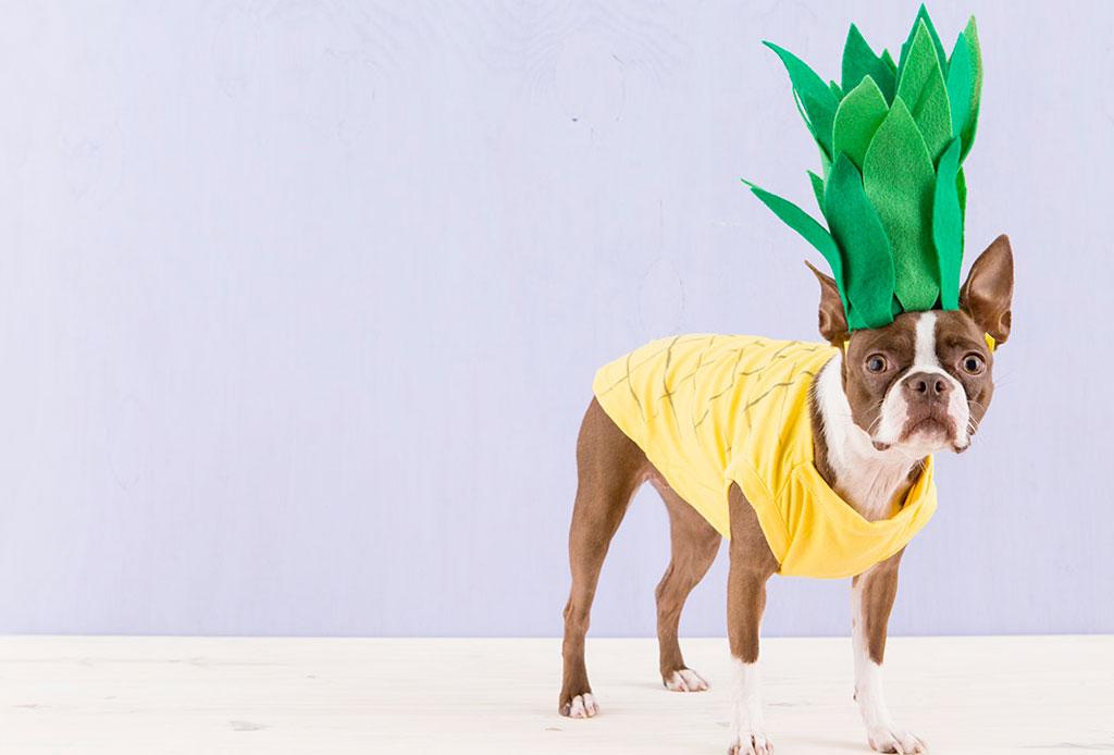 Los disfraces más tiernos y originales para tu perro