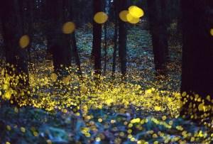 Visita el santuario de las luciérnagas a menos de 2 horas de la CDMX