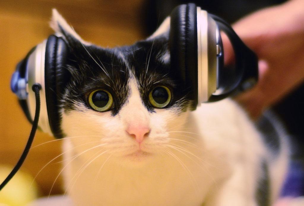 Mewsical: el primer álbum de música hecha por ¡gatos!