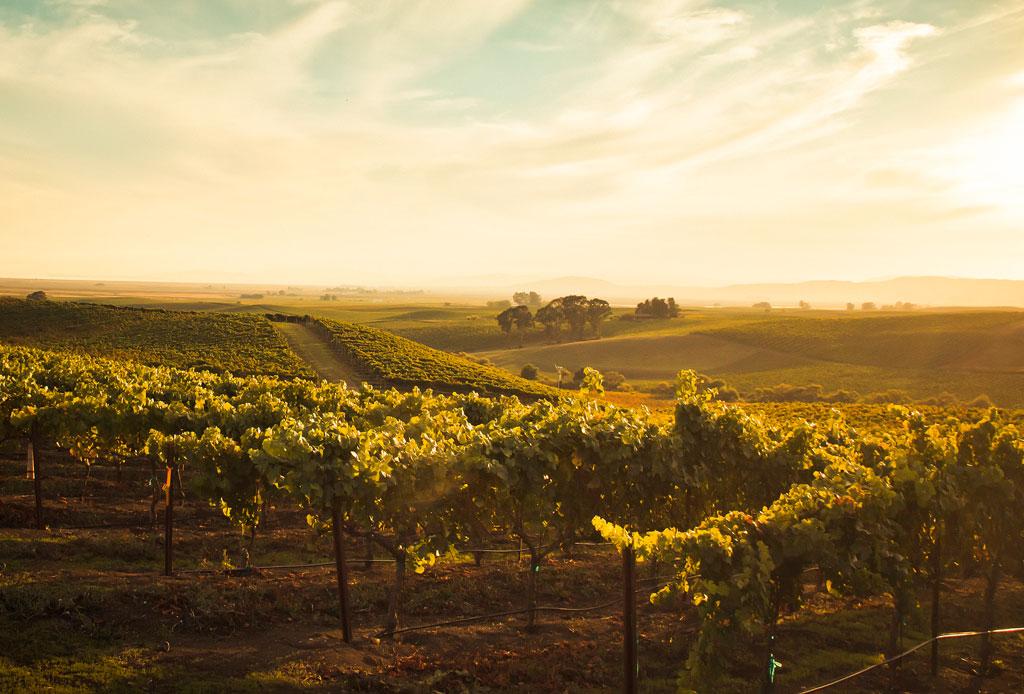 El tour de vinos de California que no te puedes perder - vinos-3