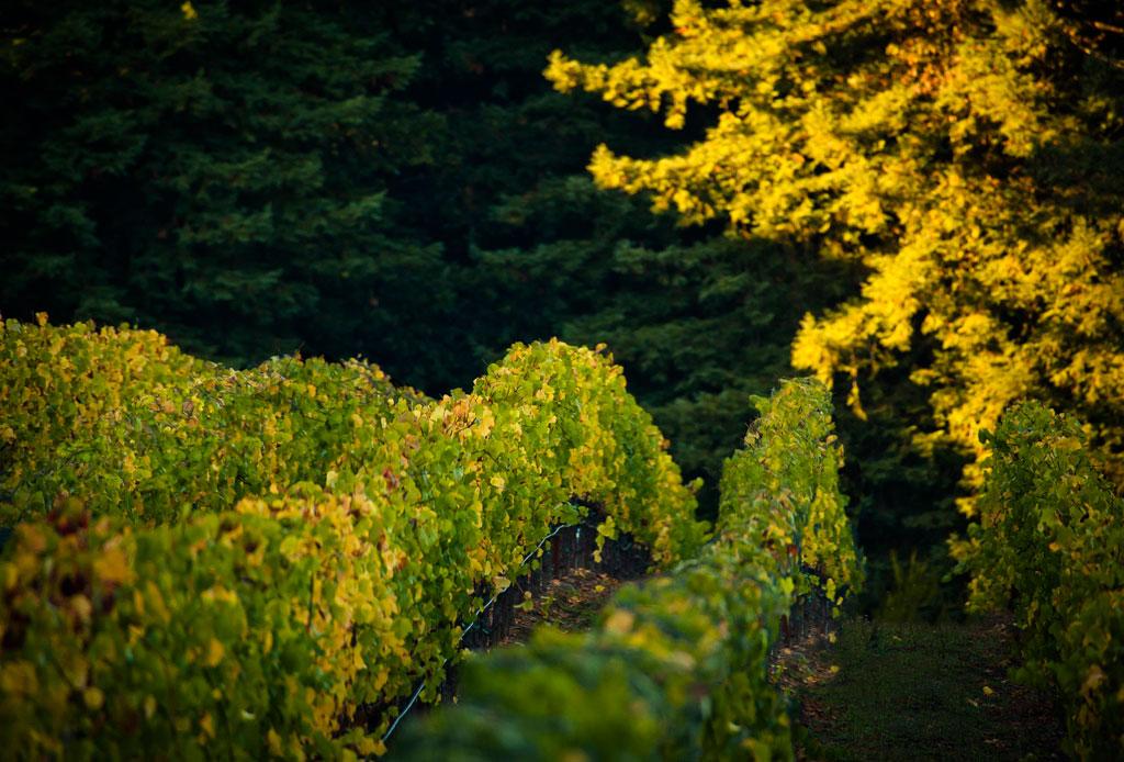 El tour de vinos de California que no te puedes perder