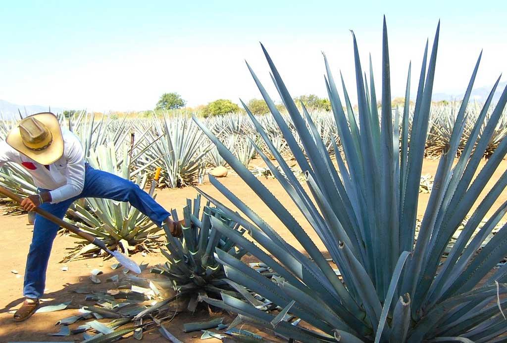 Arandas, un destino para los amantes del tequila - arandas-altos-tequila