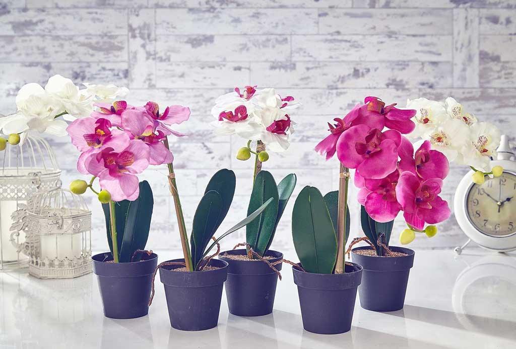 Los 6 pasos infalibles para cuidar una orquídea - orquideas