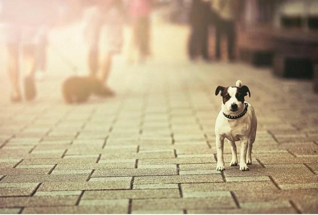 Wizapet: la app que te ayuda a recuperar a tu mascota - wizapet-portada-1024x694