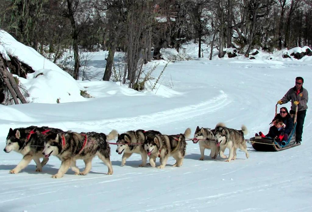 8 actividades para disfrutar Whistler al máximo durante invierno - perros