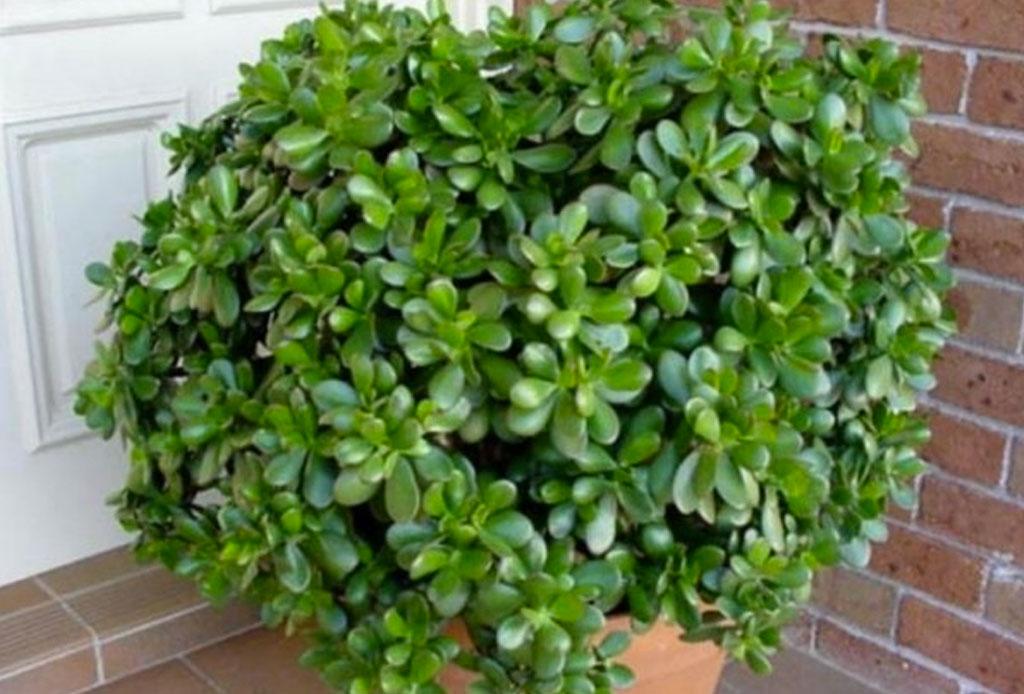 Adiós al estereotipo de 'Cat Lady', lo de hoy es ser 'Plant Lady' - planta-2
