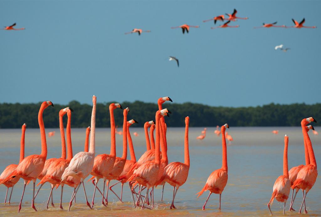 Las mejores playas vírgenes de México - playa-flamingos