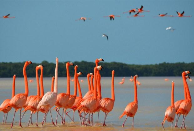 playa-flamingos
