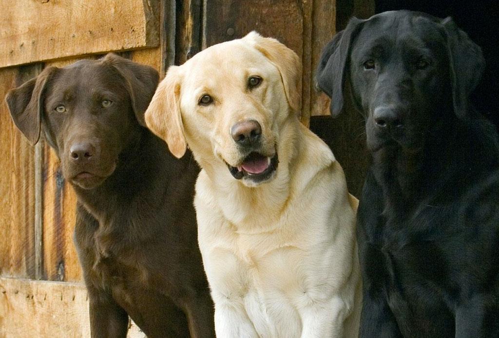 5 razas de perro que no sabías que eran de origen canadiense
