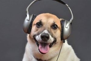 Según un estudio, los perros AMAN el reggae