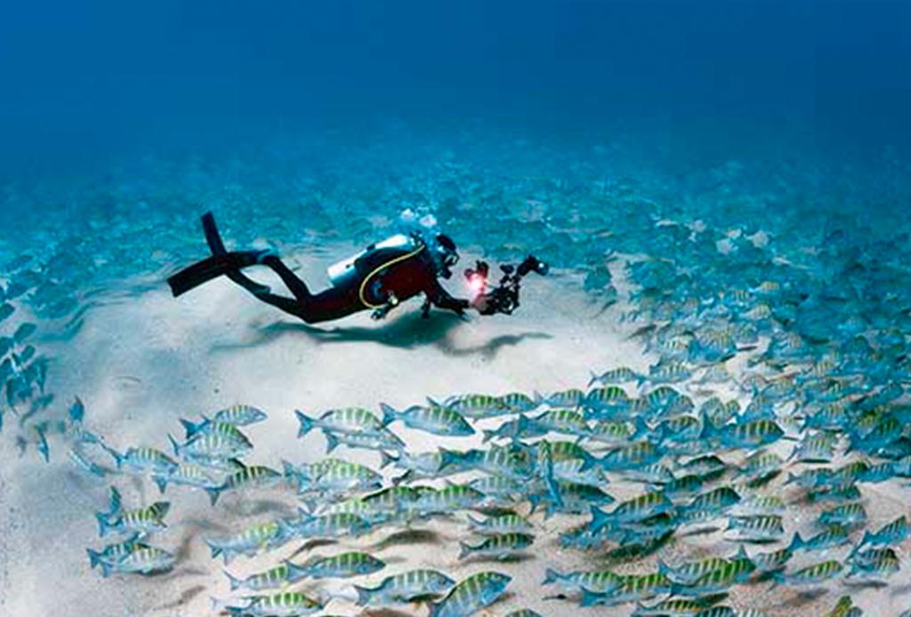 Recorre México como nunca antes: bajo el mar - buceo-cabo-pulmo