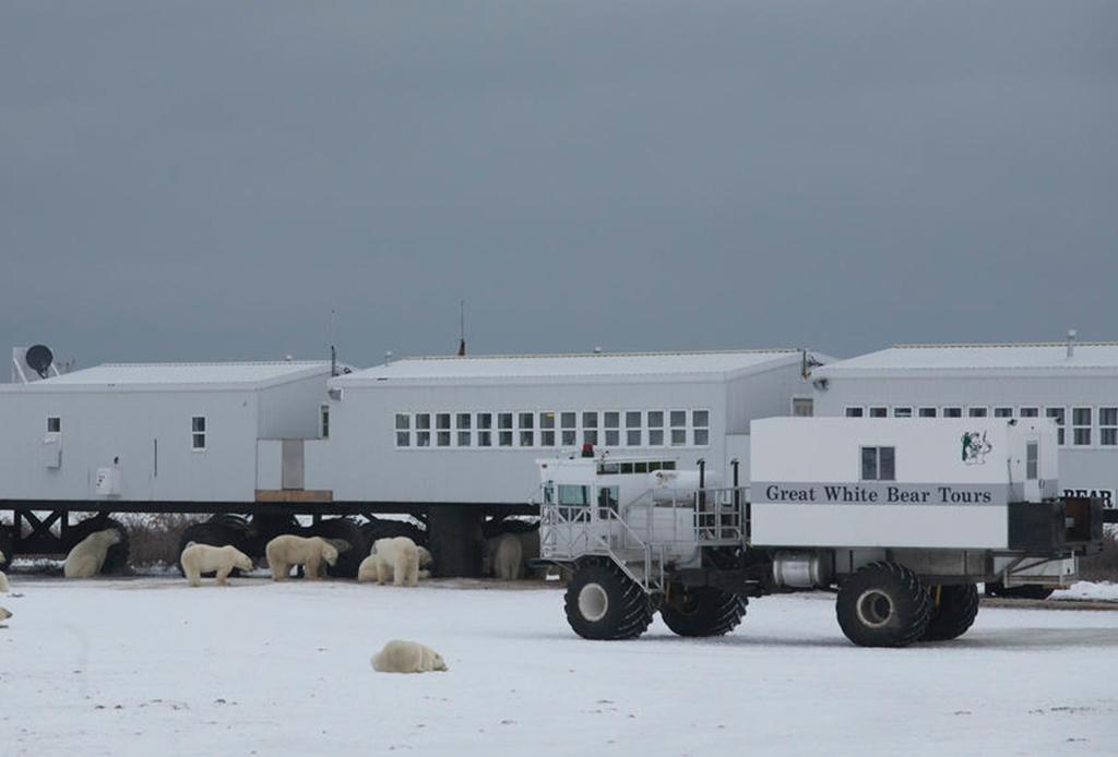 El mejor lugar para ver osos polares: Churchill, Canadá - oso-3
