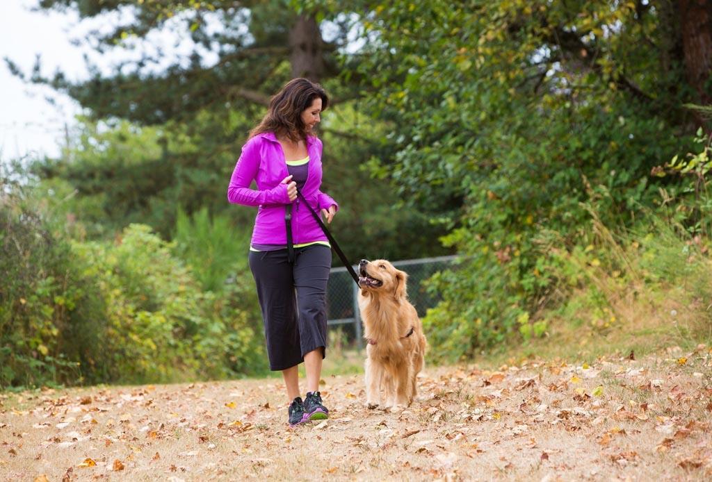 Así es como debes comenzar a entrenar a tu cachorro - dormir-pasear-perro-1024x694